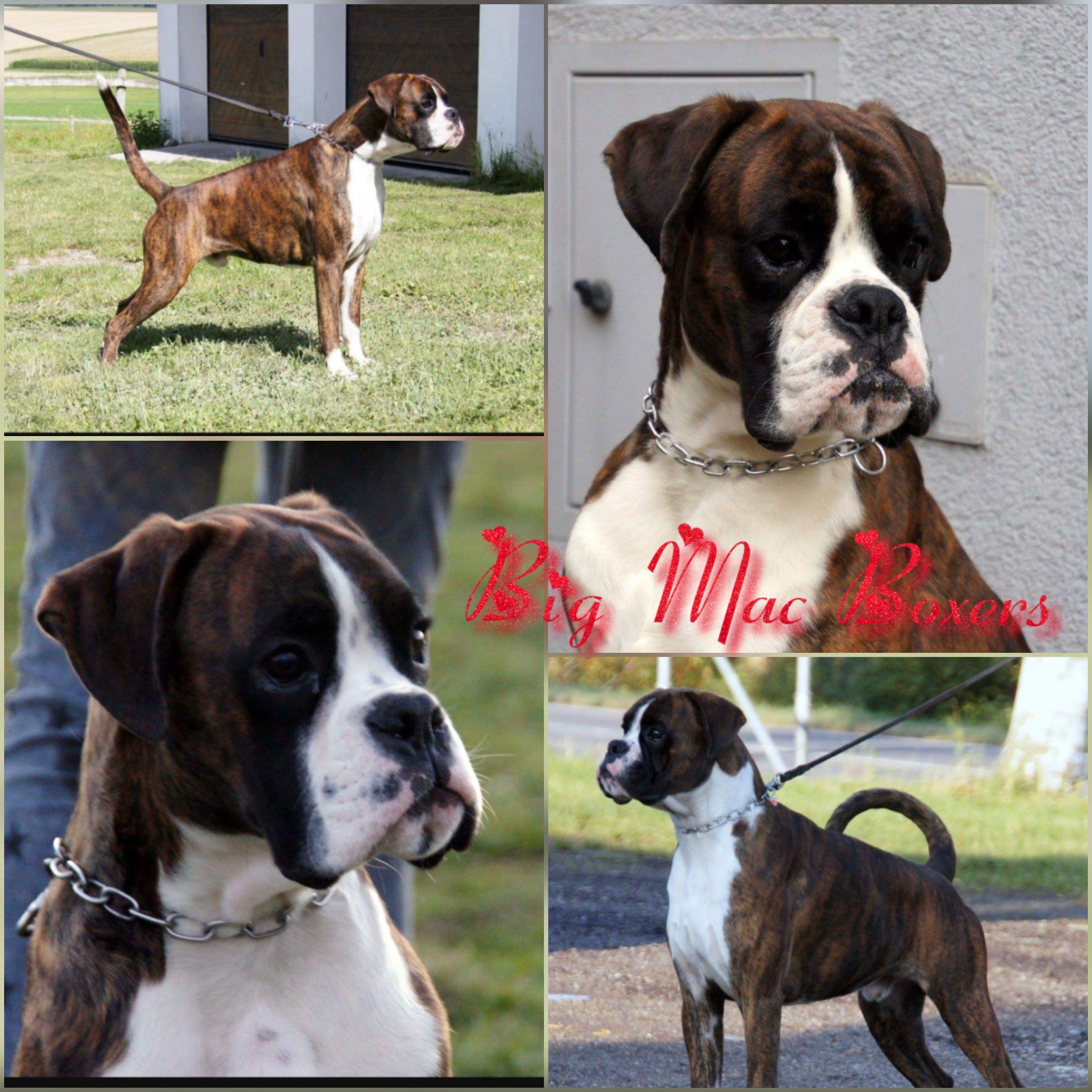 3 Yasho as pup thru 18 months