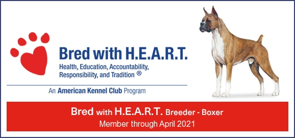 AKC Bred with Heart Certifiation
