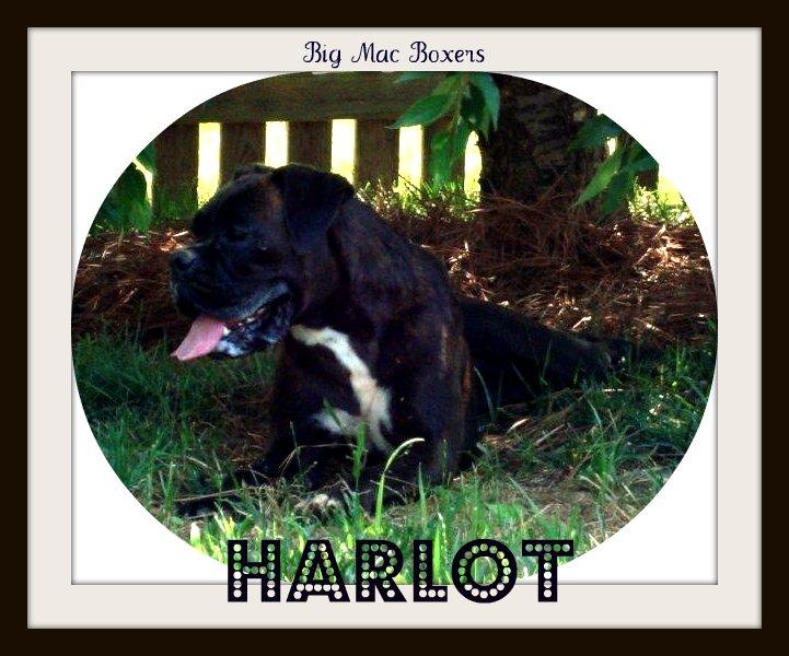 Harlot7-1-1