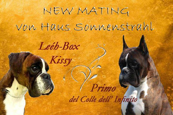 Primo x Kissy breeding